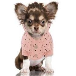 SWEAT POUR CHIEN CAPUCHE - SKY - PULL MILK AND PEPPER