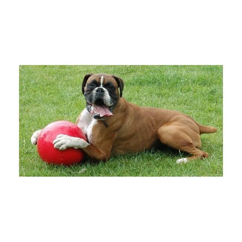 jouet pour chien boomer balle plastique pour chien cadeau pour chien. Black Bedroom Furniture Sets. Home Design Ideas