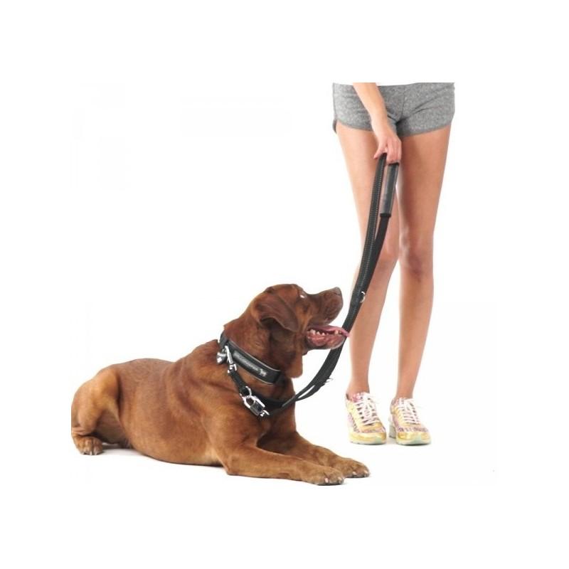 Laisse pour chien sport baptiste ballade chien promenade chien bellomania - Laisse lasso pour chien ...