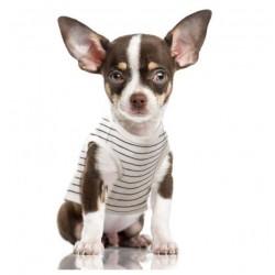 Tshirt pour chien RAOUL - Milk&Pepper