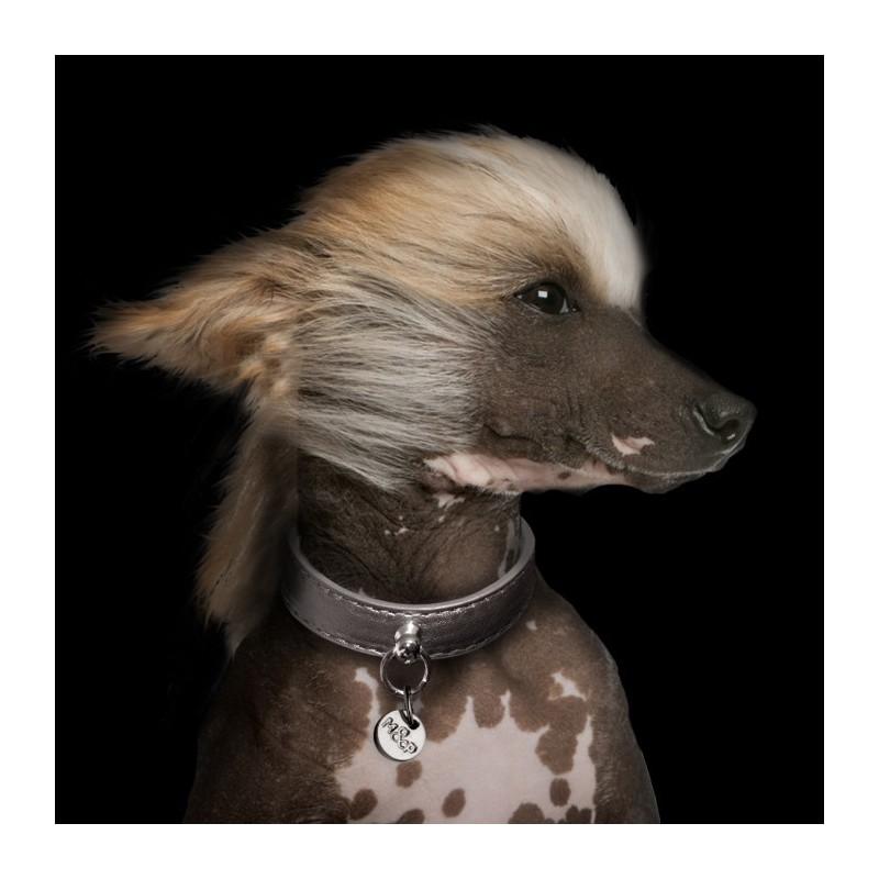collier pour chien en cuir simili shine titan collier. Black Bedroom Furniture Sets. Home Design Ideas