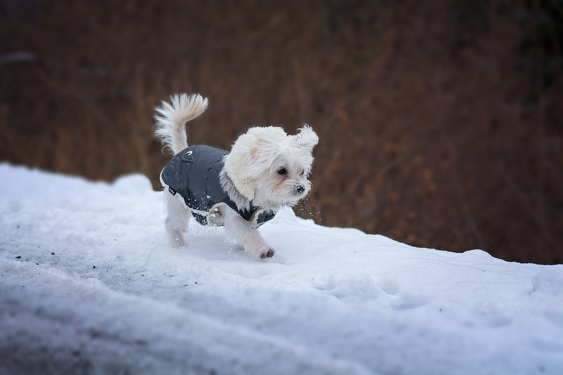 impermeable pour chien